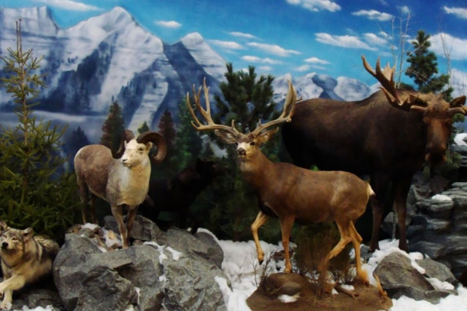 animal nature scene taxidermy