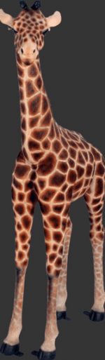 Baby giraffe Decocration