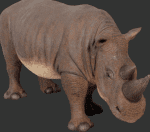 Rhinoceros Decoration