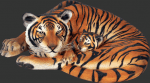 Tigres with Cub Decoration in Events