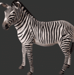 Zebra Decoration for Events