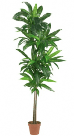 Faux Dracaena Plant | Fake plants for events