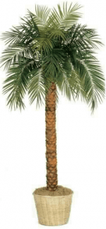 Faux Phoenix Palm Tree