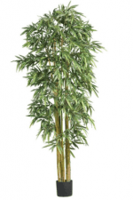 Indoor Plants for Events | Big Bamboo Silk